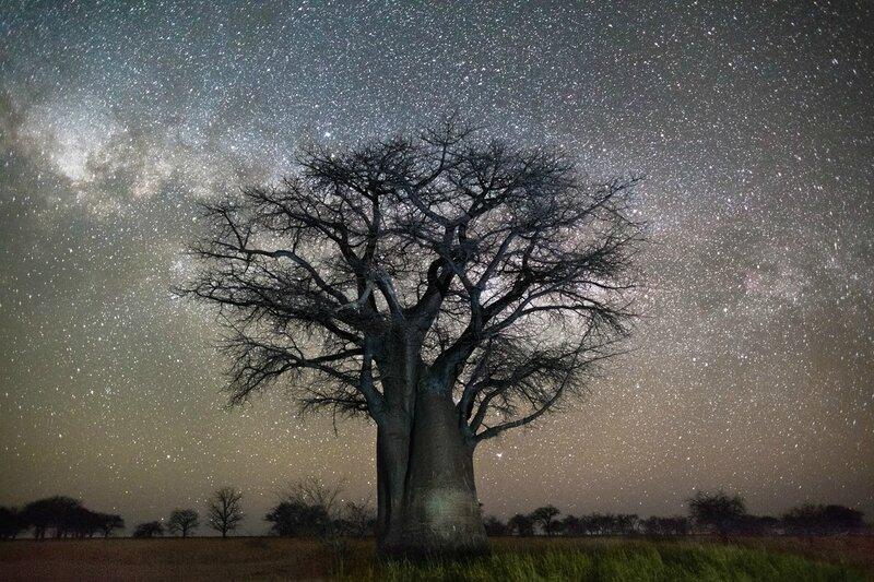 Beth-Moon-vieu-arbre-etoile-08