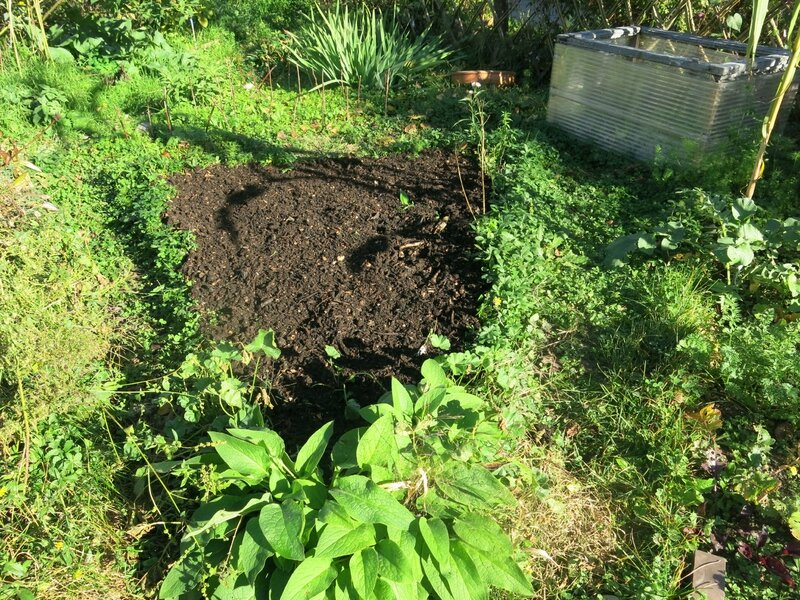 parcelle tomate compost