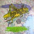Monotypes insectes
