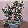 Des plantes, encore pluuuuuus de plaaaannntes