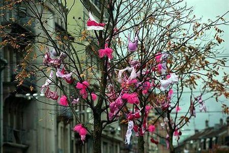 rose arbre rose à belfort
