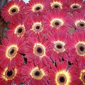 florali 9