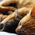 Pepita et ses chatons