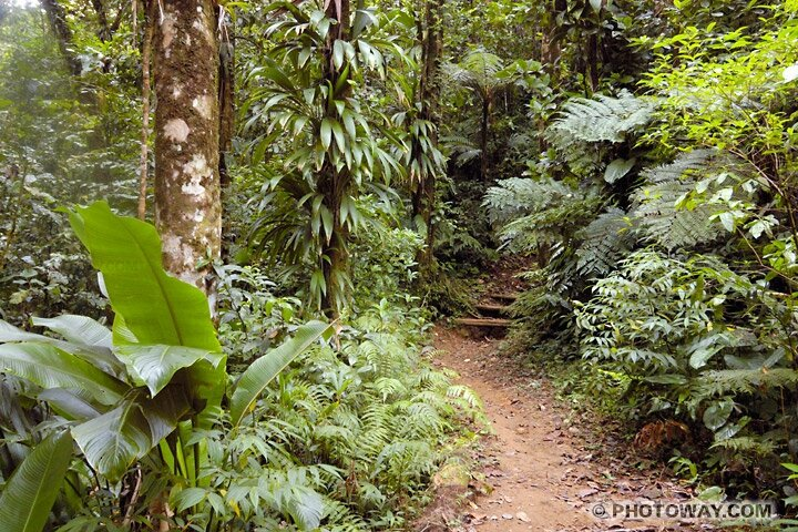 MART05_538-foret-tropicale