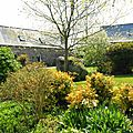 jardin printemps 2009 002