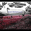 Lost animal love