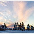 Soleil sur neige et chiens fous - sun on snow and crazy dogs
