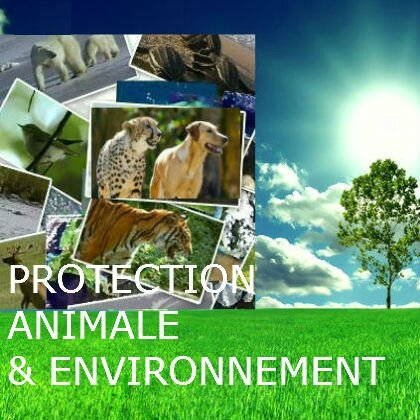 Protection Animale & Environnement