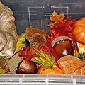 Bac découverte de l'automne