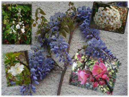Autres fleurs (4)