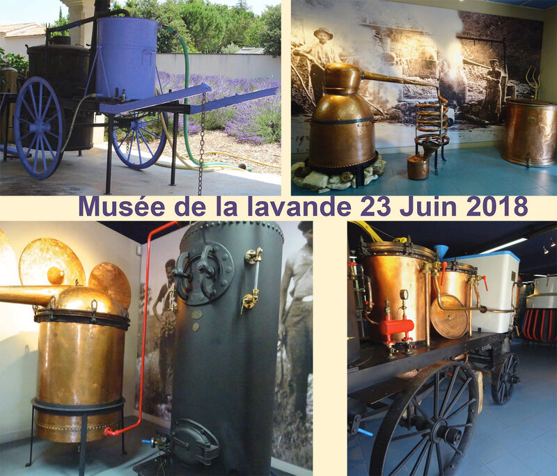 MUSEE LAVANDE