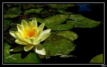 fleur_d_eau