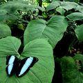 Butterfly (84)