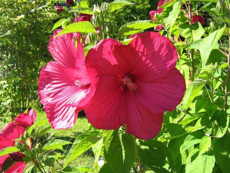 Août 2007, jardin botanique.