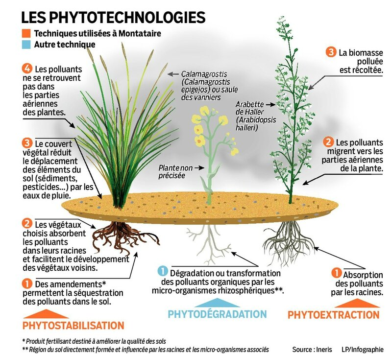 phyto-images