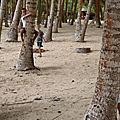 Séance photo derière les cocotiers de la plage de Dompierre, Ter