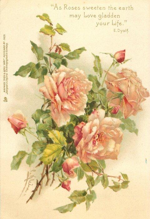 Roses pour Katia (25)