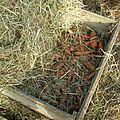 Un silo a carottes