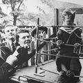 Doisneau - Les animaux supérieurs - 1954