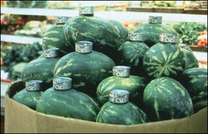 orozco_cats_and_watermelons