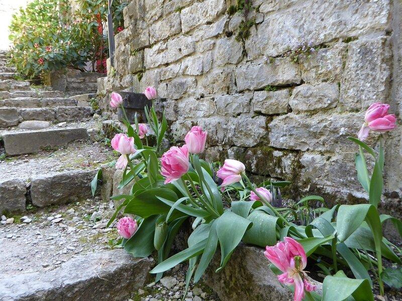 Escaliers et tulipes