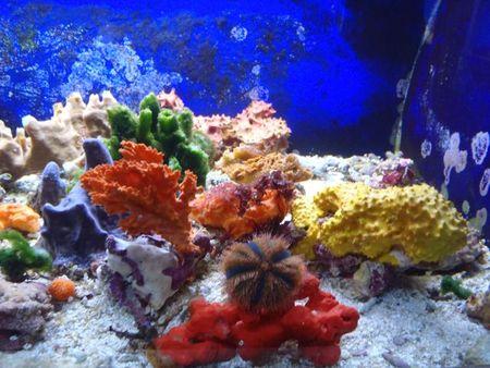 Ecosyst_me_multicolore
