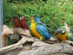 Zoo_Sanary_6