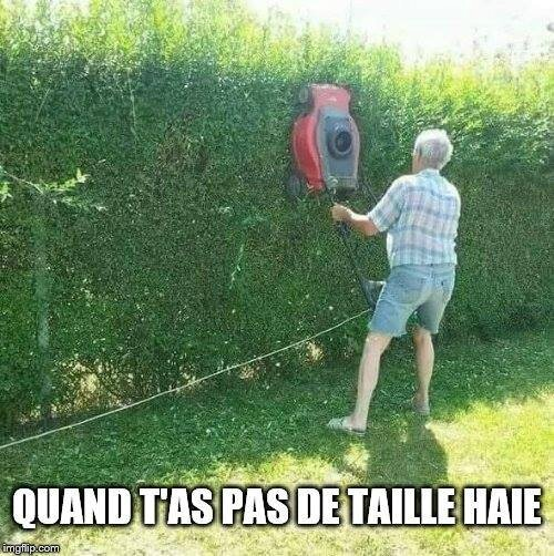 Taille haie