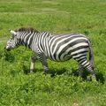 2010-03-09 Ngorongoro (293)