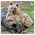 Faire les yeux d'ours