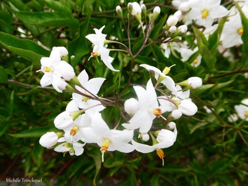 1-Fleurs de Léon 300719