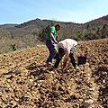 Plantations au Deves de Manaval