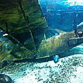 aquarium de Touraine