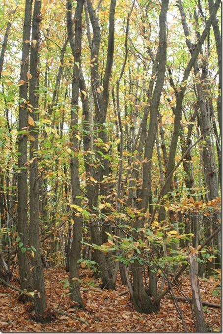 Balade en forêt cp ce1-47