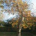 automne097