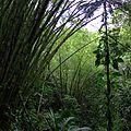 rain forest (2)