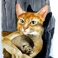 Entre chatte et chaton...