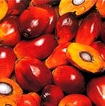 huile_palme_bio_huile_palme_conventionnelle_l_L_1
