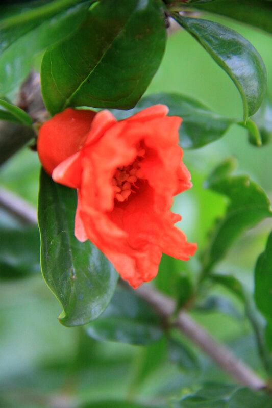 Instants fleuris du jour (7)