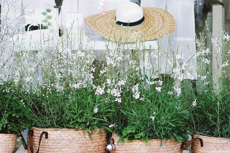 plantes-protegent-maison_1522506369-960x640