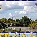 Parc ornitologique du teich - france