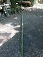 Perche bambou