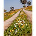 La route des fleurs