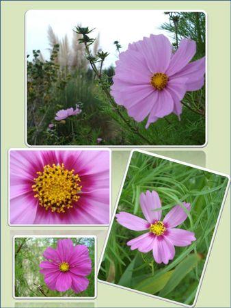 Fleurs 2009-2010 (9)