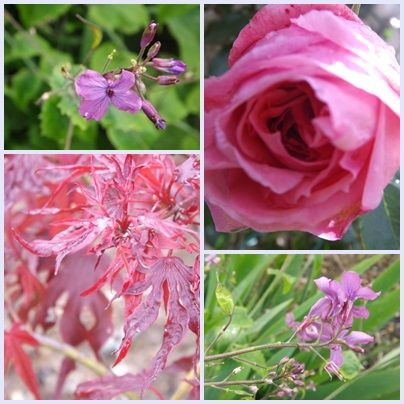 Fleurs 30 mai 2013 (6)