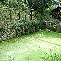 Jardin sauvage St Vincent (13)