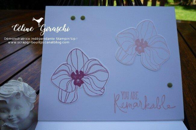 Coffret Orchidées -3