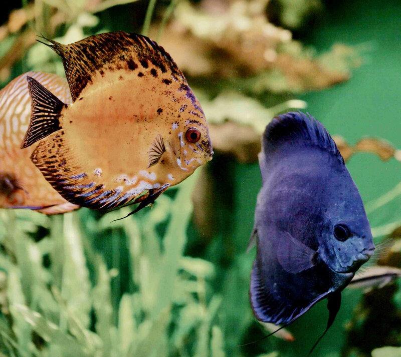 Dossier aquario PM277