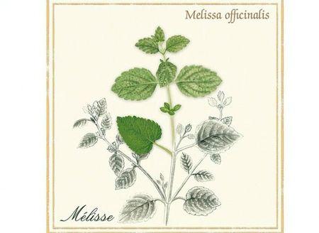 melissa-l650-h474-c