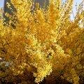 arbres en fleurs 2